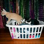 Playful Kittens in a hamper 2 !! by Barberelli