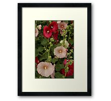 Pink and Red Hollyhocks  Framed Print