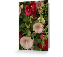Pink and Red Hollyhocks  Greeting Card