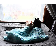 Lovey Dovey Cozy Kittens! Photographic Print