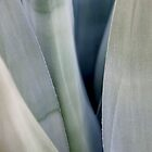 Blue Agave by Glennis  Siverson