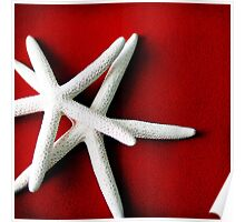 White Starfish Poster
