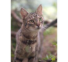 Snuggle-Cat Photographic Print