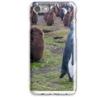 King Penguins on the Falkland Islands iPhone Case/Skin