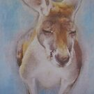 Curious Kangaroo  by Julie  Sutherland