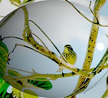Painted bird's egg ? by Carole Boudreau