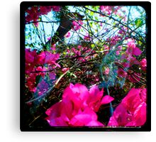 Pink Delight Canvas Print