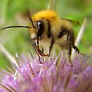 Mr Bumble by George Swann