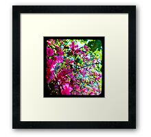 Tropical Suburbia Framed Print