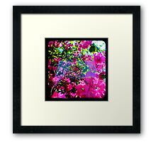 Pink Divine Framed Print