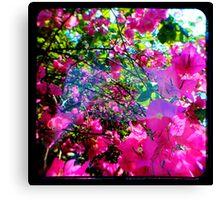 Pink Divine Canvas Print