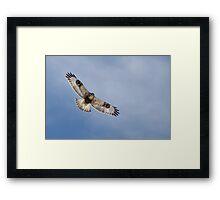 Rough-legged hawk Framed Print
