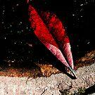 red leaf on edge by ragman
