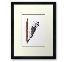Downy Woodpecker bird Framed Print