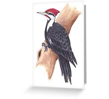 pileated woodpecker bird painting Greeting Card