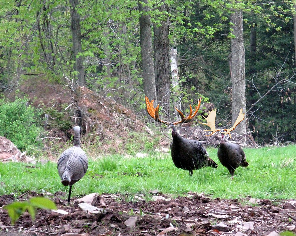 Bull Turkeys by Ann Rodriquez