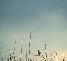 Bird by Mark Hooper
