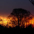 Winter Sunset by Trevor Kersley