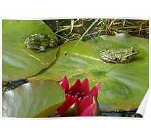 TWO princes on lily pads! Poster