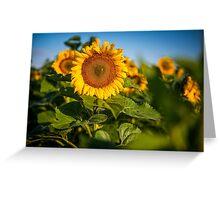 Sunflowers in North Dakota Greeting Card