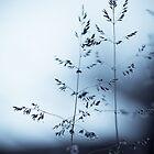 silver silence by Nika Seliverstova