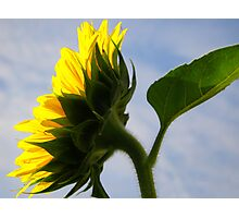Sunny Profile Photographic Print