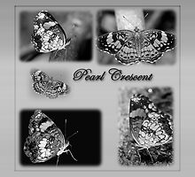 Butterfly Montage in Black and White by Bonnie T.  Barry