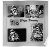 Butterfly Montage in Black and White Poster