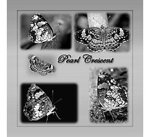 Butterfly Montage in Black and White Photographic Print
