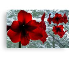 Snow White & Rosy Red Canvas Print