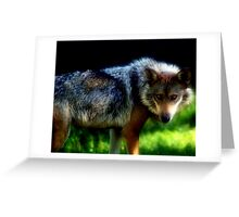 Who's afraid of the big bad wolf? Greeting Card