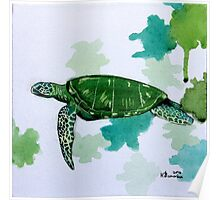 Turtle Study Poster