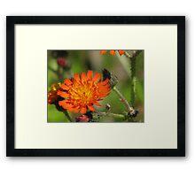 Paint Brush Bloom Framed Print