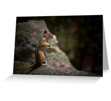 Golden Mantled Ground Squirrel Living Up To Its Name  Greeting Card