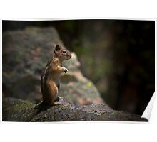 Golden Mantled Ground Squirrel Living Up To Its Name  Poster