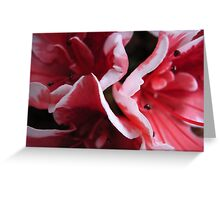 azalea V Greeting Card