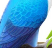 Masked Lovebird Blue Sticker