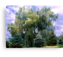 Giant Weeping Willow Canvas Print