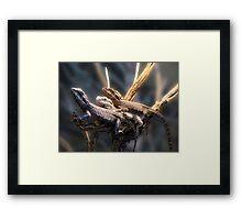Western Bearded Dragon - Naturaliste Reptile Park Framed Print