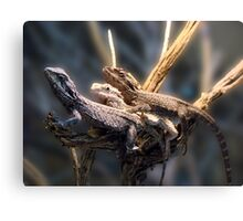 Western Bearded Dragon - Naturaliste Reptile Park Canvas Print