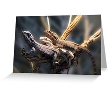 Western Bearded Dragon - Naturaliste Reptile Park Greeting Card