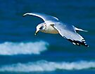 Seagull over beach at Inverhuron by Yukondick