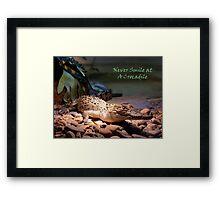 Crocadile - Naturaliste Reptile Park Carbunup W.A, Framed Print