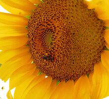 Giant Sunflower by jansnow