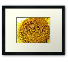 In Your Pretty Face Framed Print