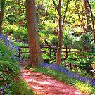 Glen Maye by Mishka Góra