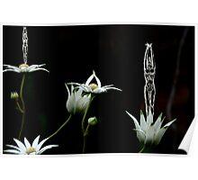 Flower Dancers Poster