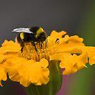 making a bee line by Steve plowman