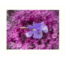 The Kale & The Pansy Art Print