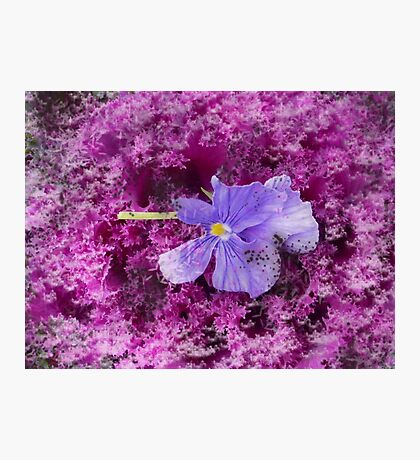 The Kale & The Pansy Photographic Print